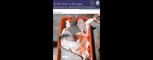 European Elasmobranch Association